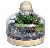 SPECIAL PURCHASE!  Terrarium With Wood for Miniature Gardening!