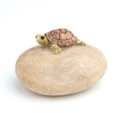 Turtle on Stone Landscape Accent For Miniature Fairy Gardens