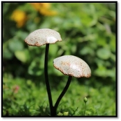Metal Mushrooms for Miniature Fairy Gardens