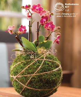 Succulent KoKedama Kit For Fairy Gardening
