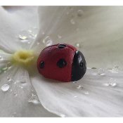 Set/4 Lady Bug Picks for Miniature Fairy Gardens